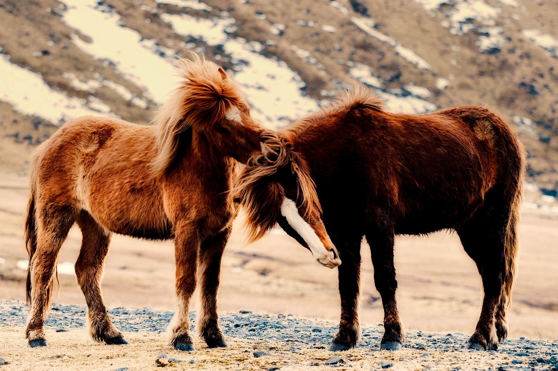 Welke oefeningen moet elk jong paard kunnen?