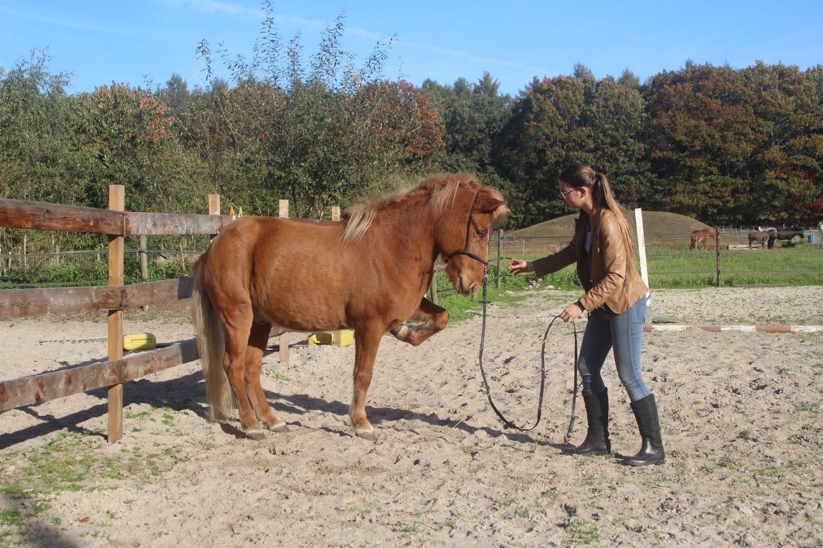 Stage lopen bij een paardenbedrijf besti vinur for Paardenbedrijf te koop