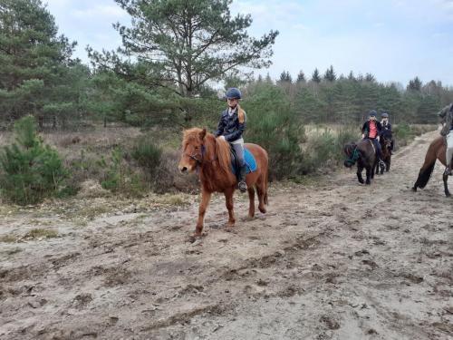 Paardrijden Steenwijk