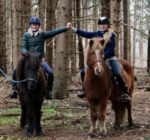 Plezier met paarden