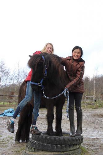 Grondwerk met paarden