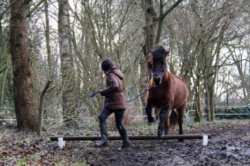 Vrijspringen met de paarden