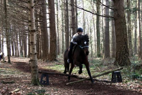 Springen met paarden
