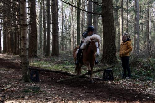 Cross parcours in het bos