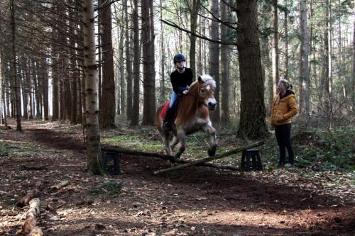 Paardrijden springles