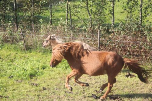 Paard zijn